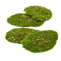 荷蘭Emerald人造植物 青苔蘚 (4入)