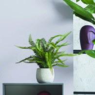 荷蘭Emerald人造植栽 羊齒蕨 (膠盆、55公分)